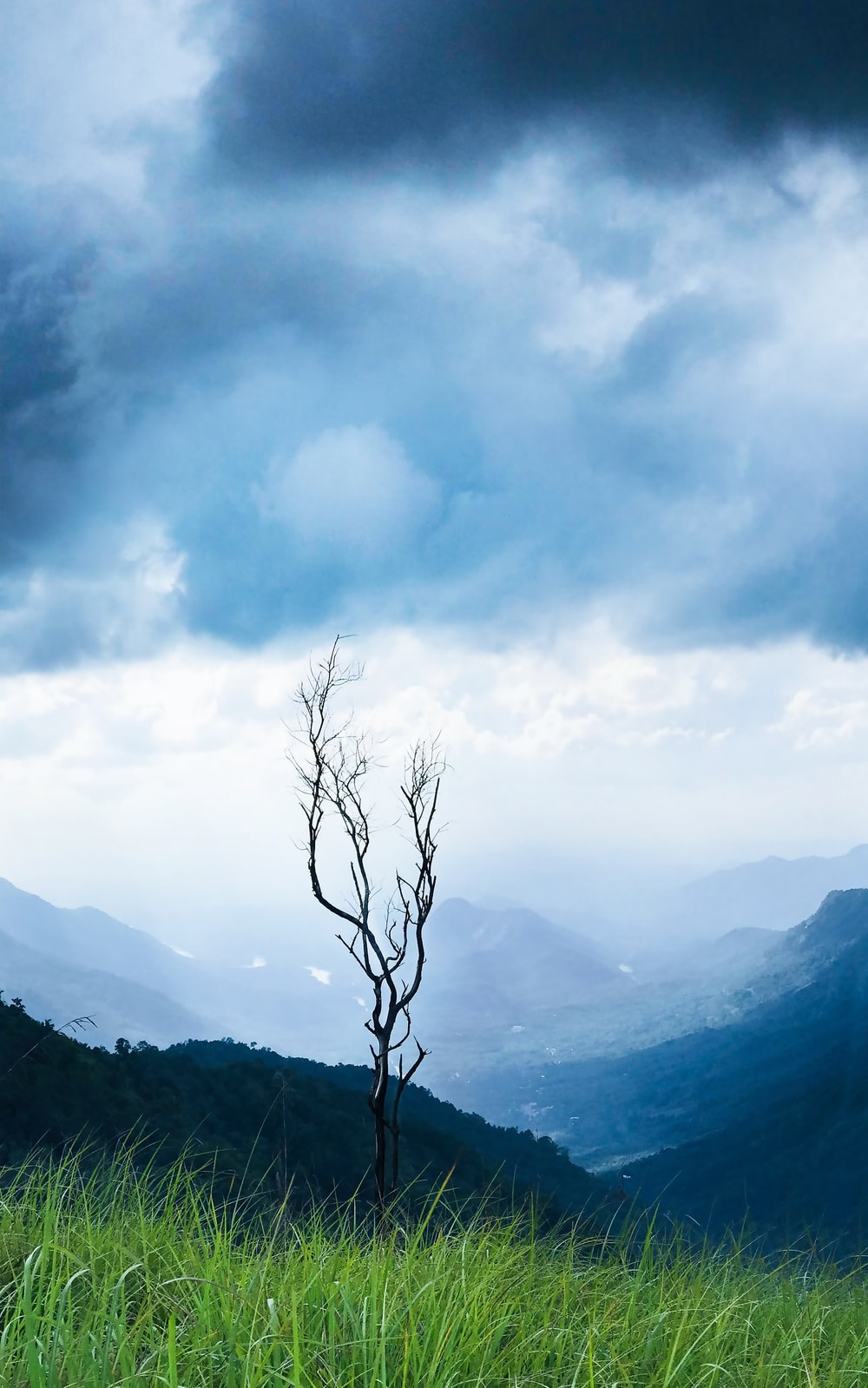 bare tree on mountain under cloudy sky during daytime