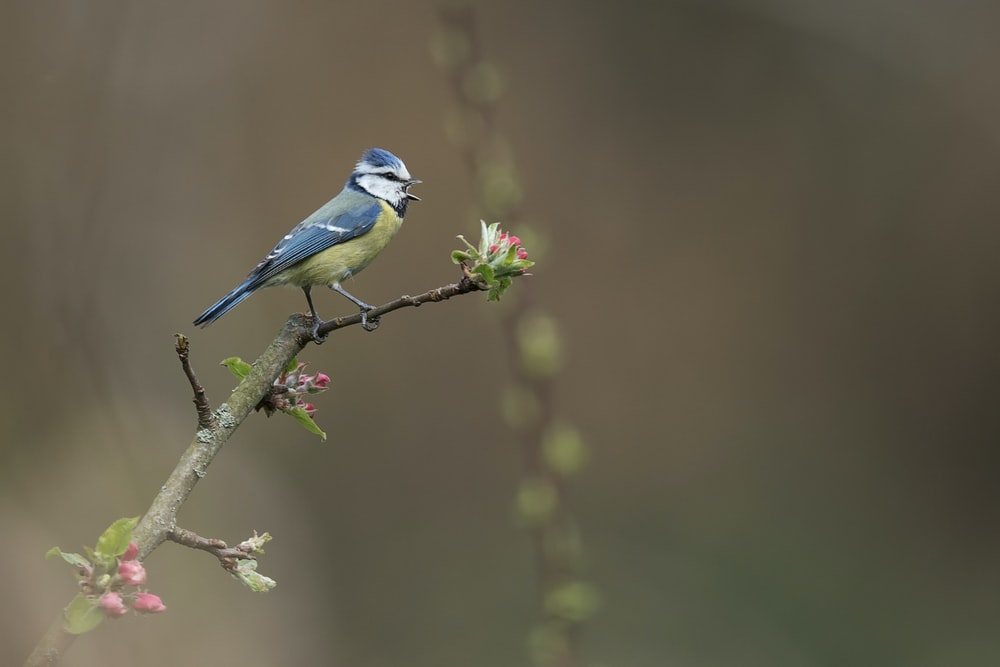 blue and white bird on green plant