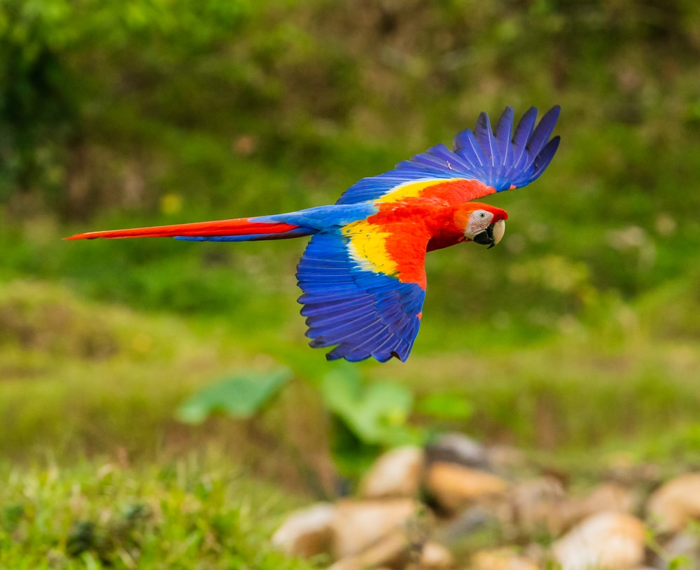 blue and red macaw on brown tree branch during daytime
