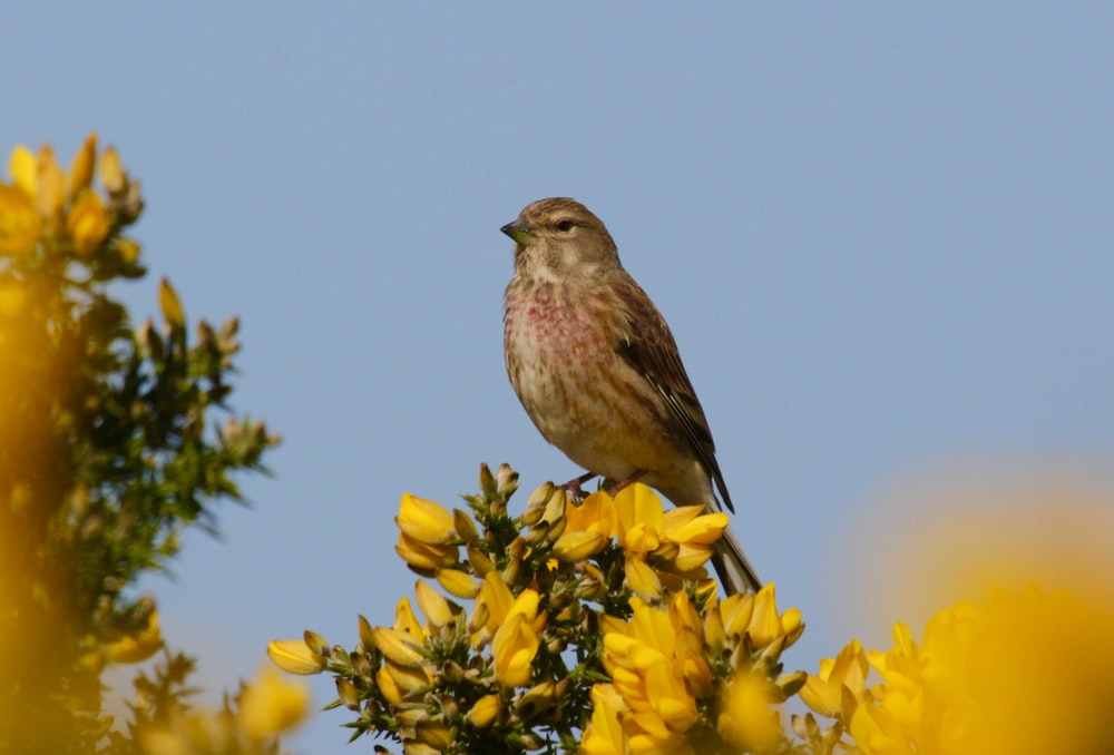 brown bird perched on yellow flower during daytime