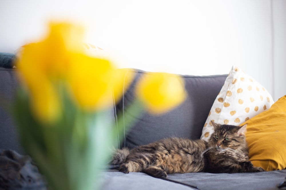 brown tabby cat lying on white and brown floral textile