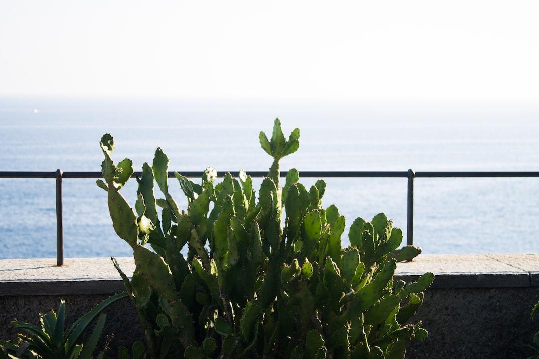 Cactus sea landscape mediterranean green blue