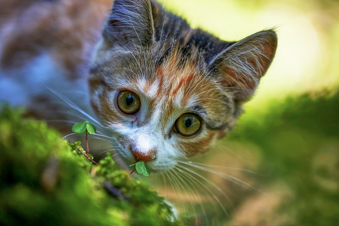 A beautiful young cat in the forest of Alikon