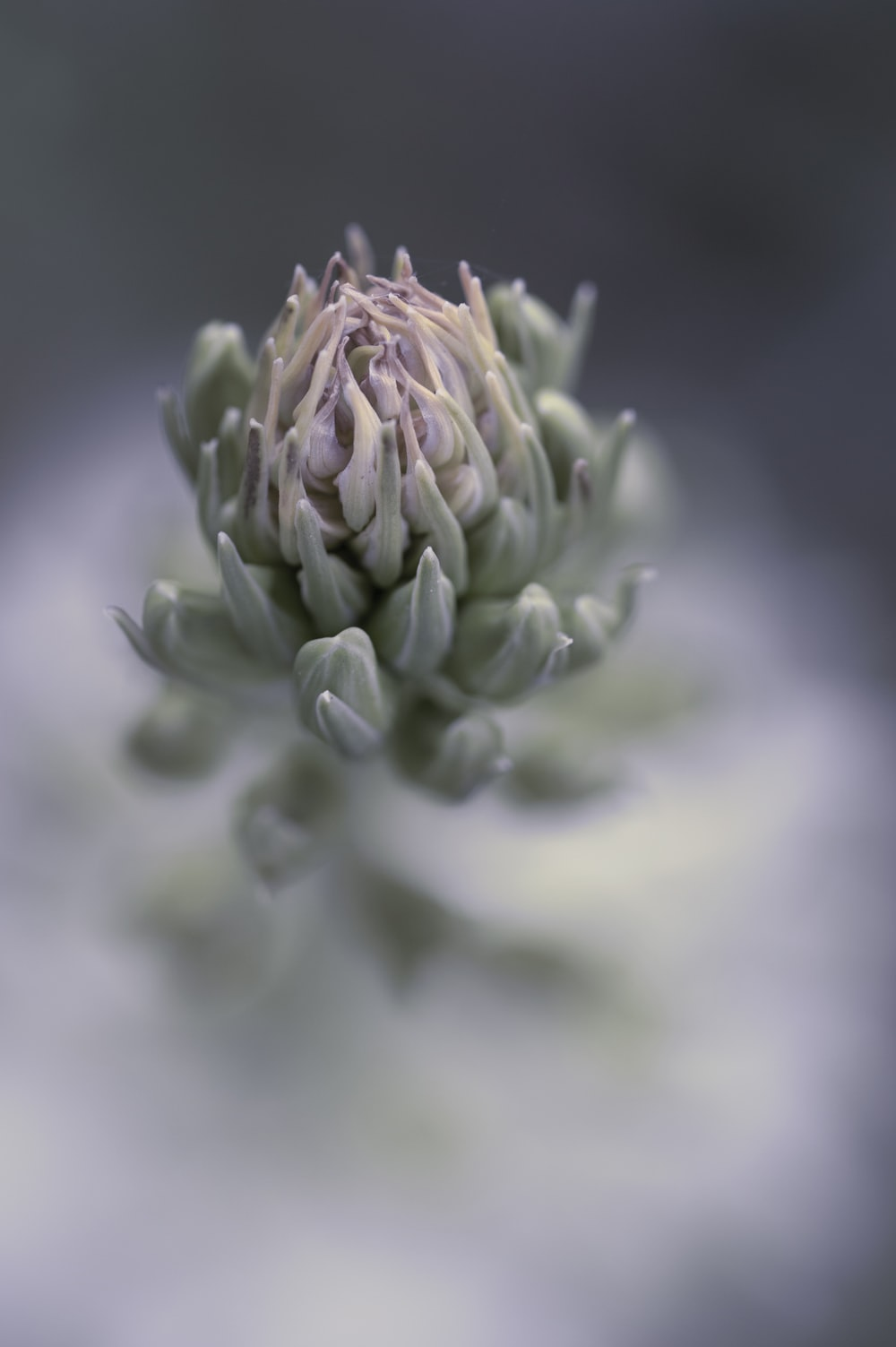 green flower bud in close up photography