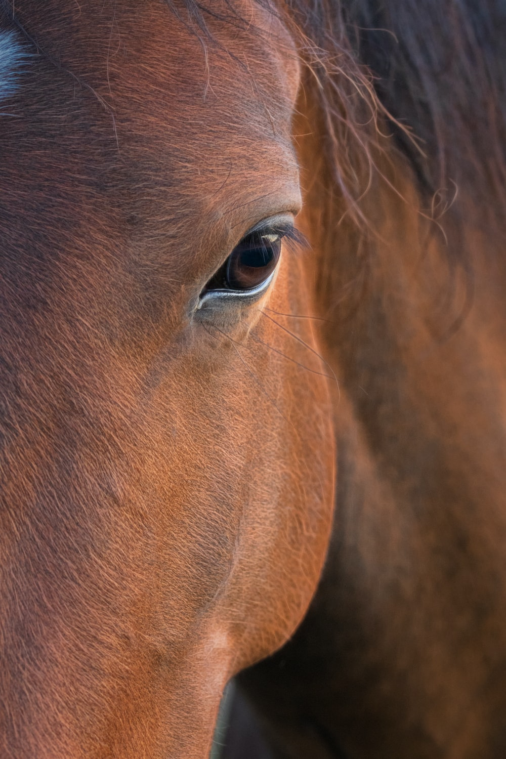 brown horses eye in close up photography
