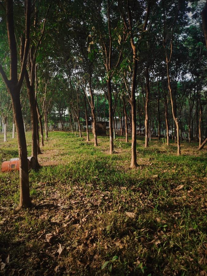 Woods in Kerala