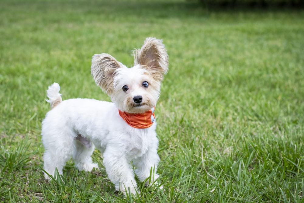 white puppy on green grass field during daytime