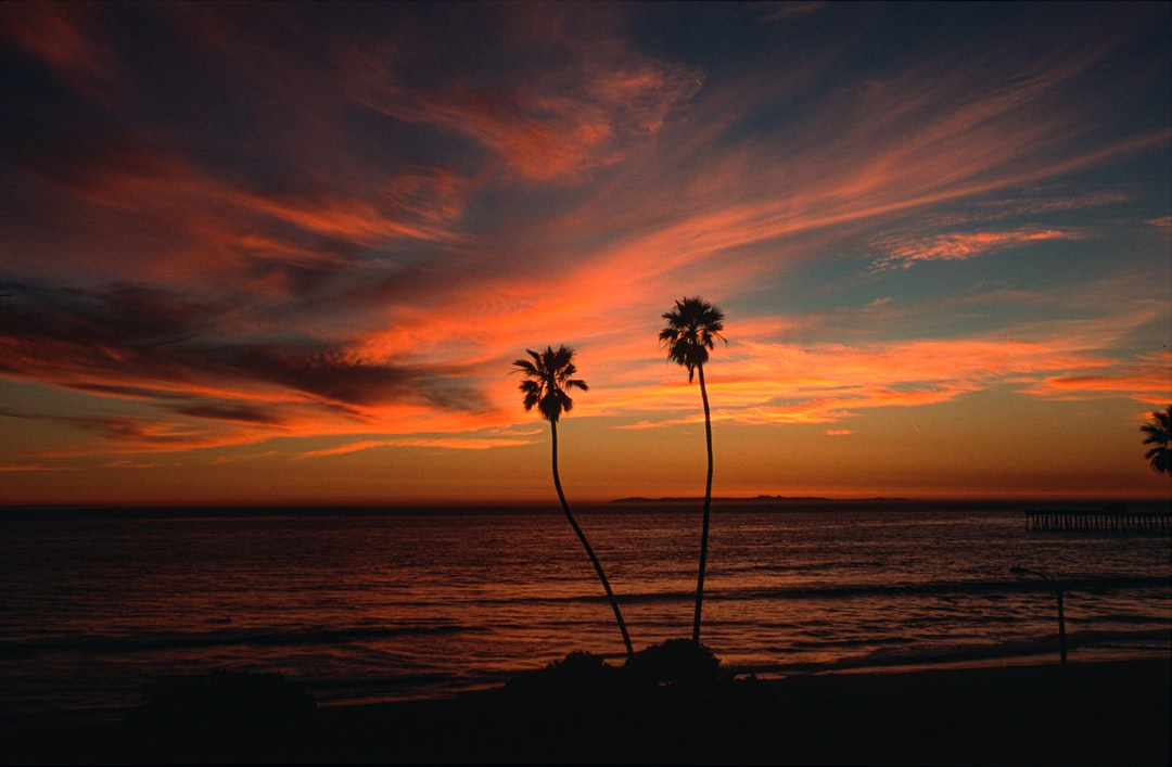 """I have long called these """"the Twins"""" and shot them many times during my years in San Clemente. I wish I could transport them to Florida. Love these palm trees."""