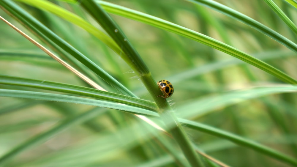 orange and black ladybug on green grass during daytime