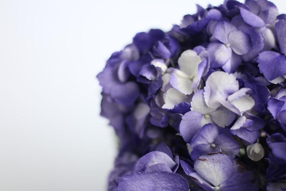 purple flower in white background