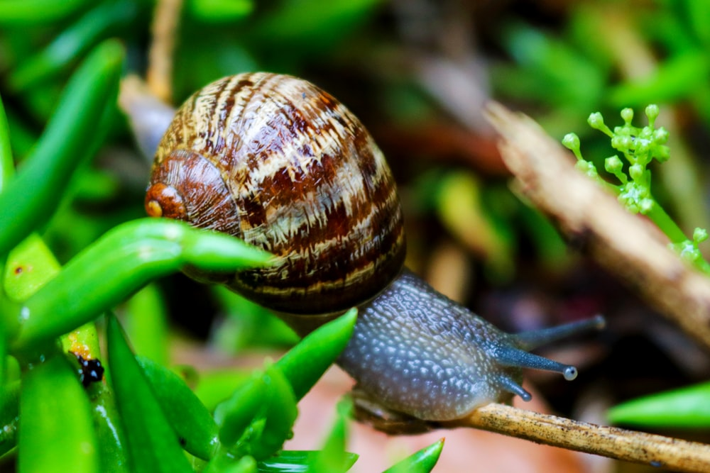 brown snail on green plant