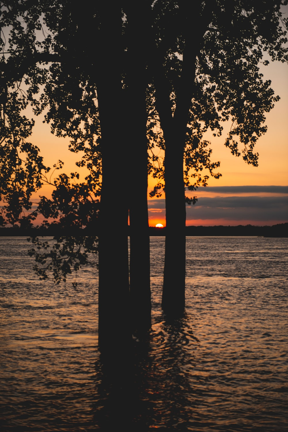 silhouette of trees on sea shore during sunset