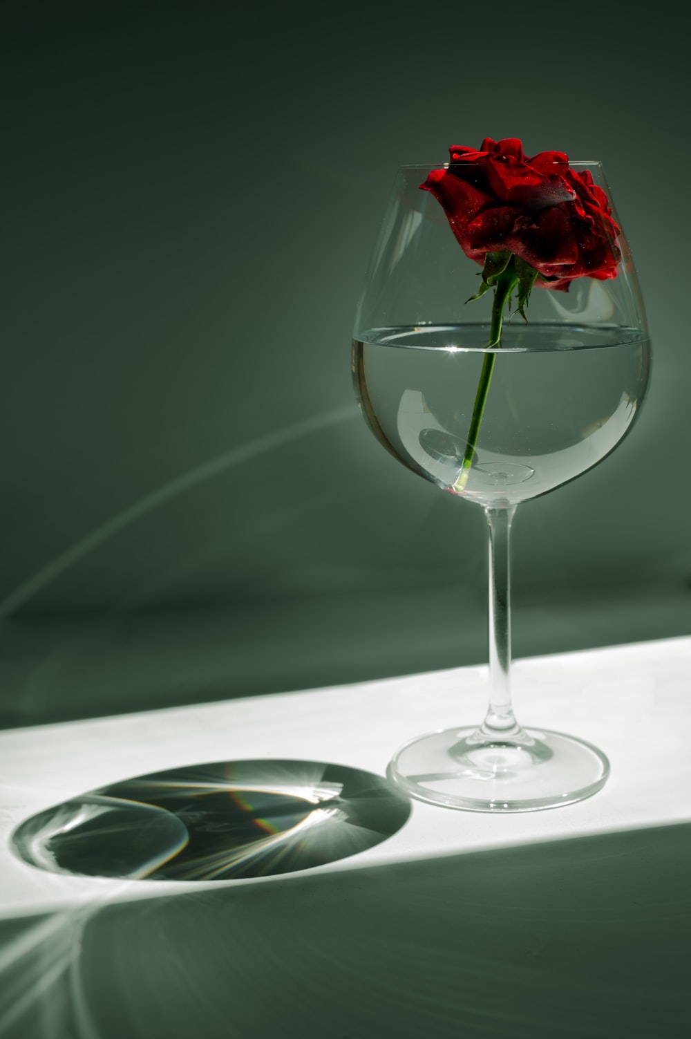 red rose in clear wine glass