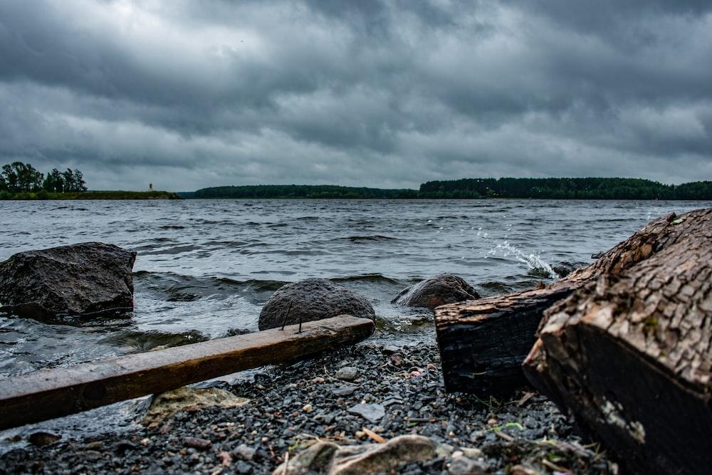 brown wood log on seashore under cloudy sky during daytime