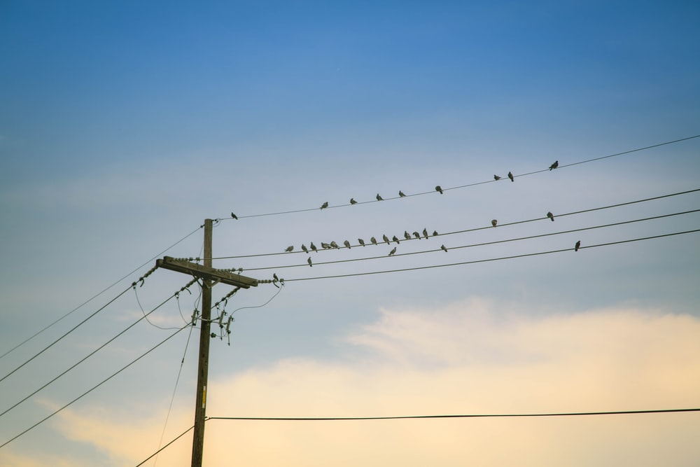 flock of birds on electric wire under cloudy sky during daytime