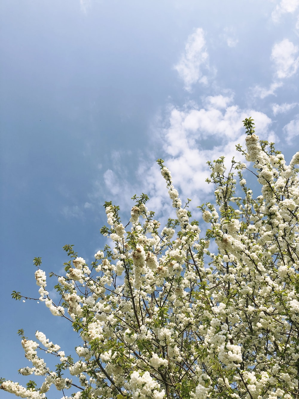 white flowers under blue sky during daytime