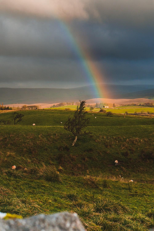 green grass field under rainbow