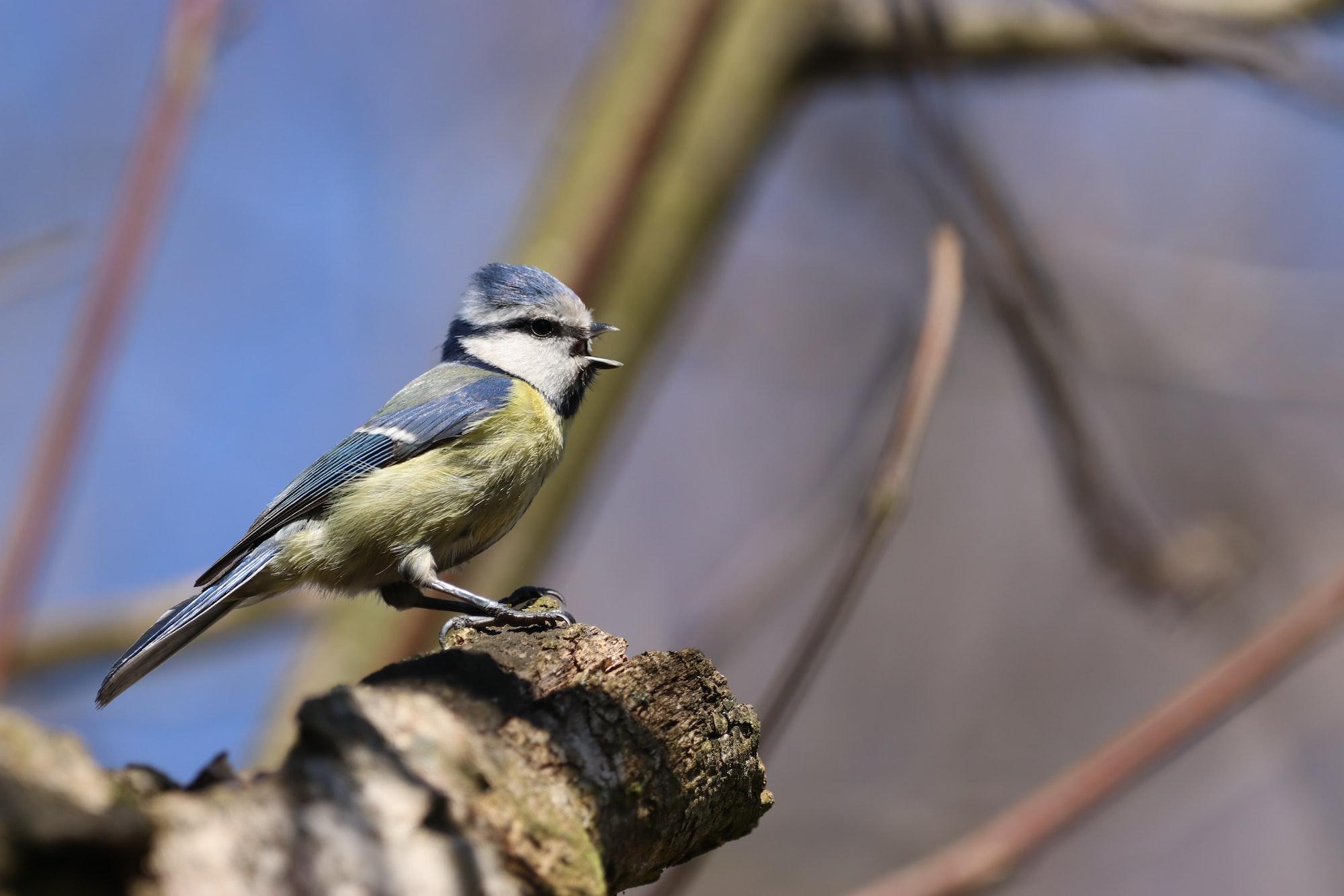 Birdwatching Adventures in Central Park