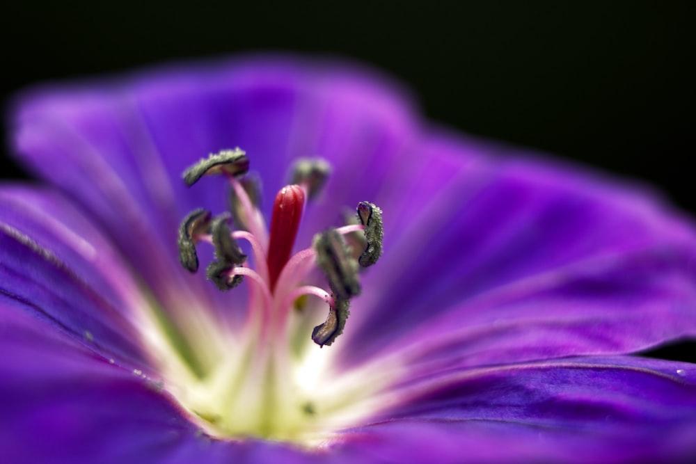 purple flower in macro shot