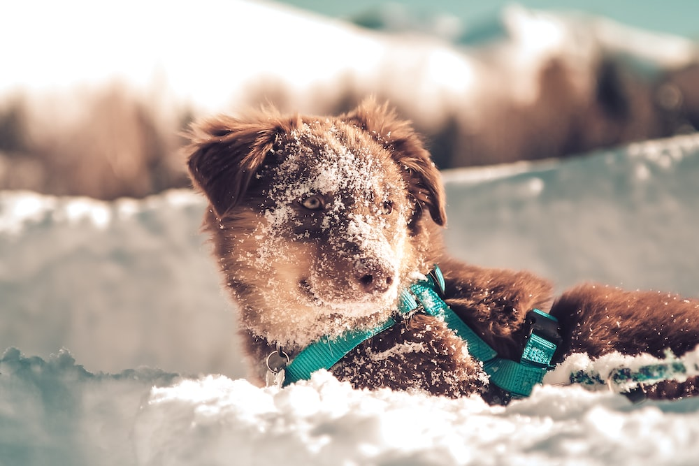 brown and white short coated dog with green collar