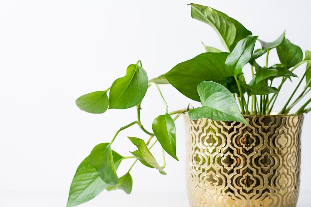 green plant on white ceramic vase