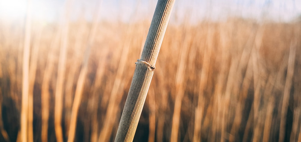 brown wooden stick in tilt shift lens
