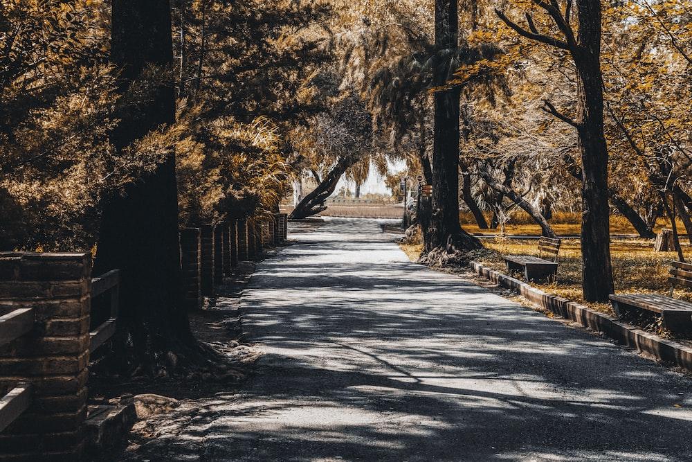 gray concrete road in between trees