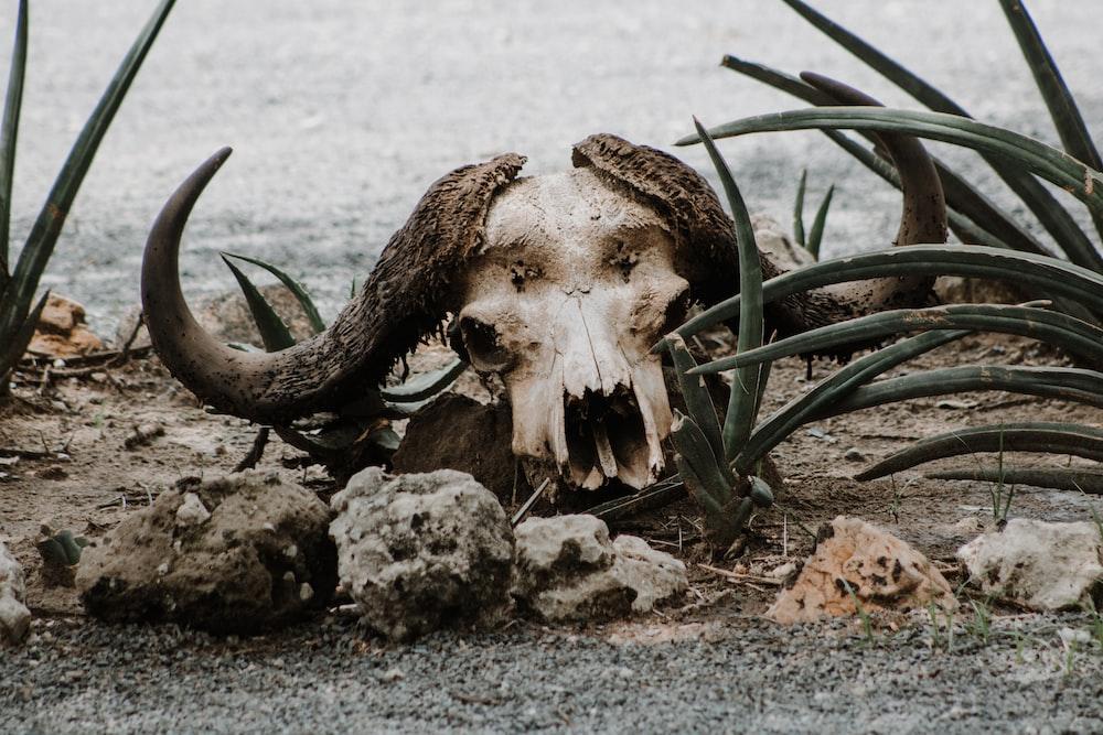 brown animal skull on gray sand during daytime
