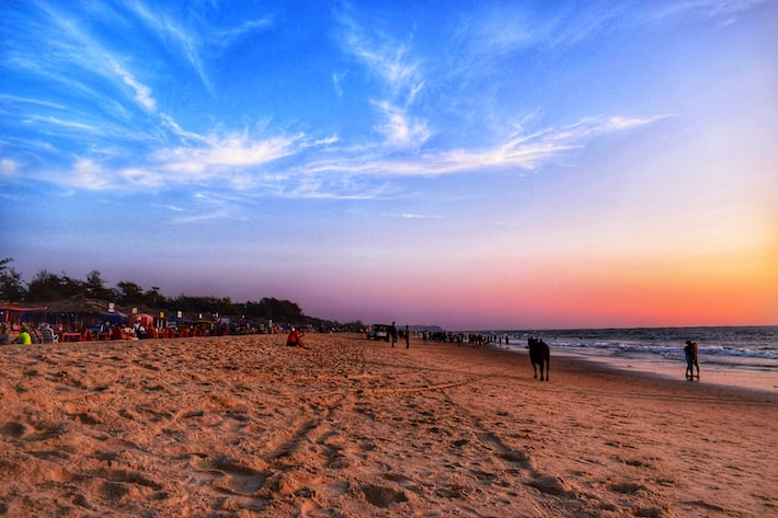 Pet-Friendly Vacation Destinations in India