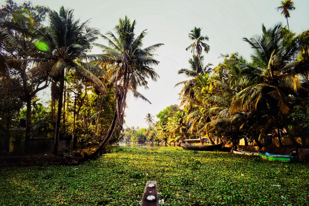 A click of Alleppey
