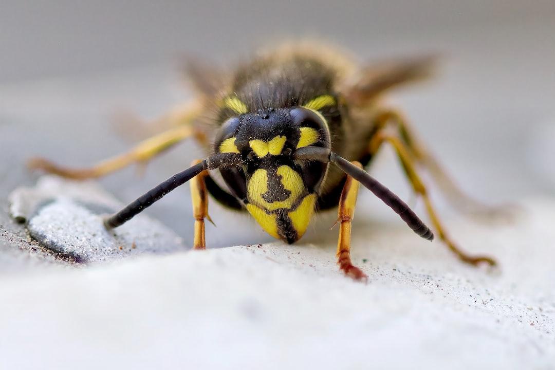 Old wasp on my window bar
