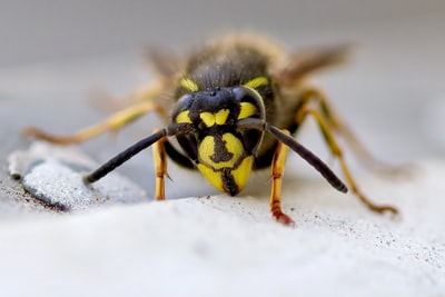 yellow and black bee on white snow