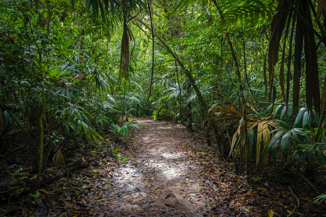 Touring Tikal (Guatemala) is an experience where you will not see the end of the jungle ...