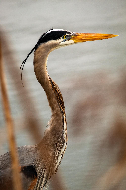 brown and white long beak bird
