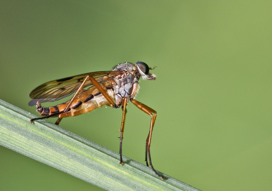 the fly on the catwalk