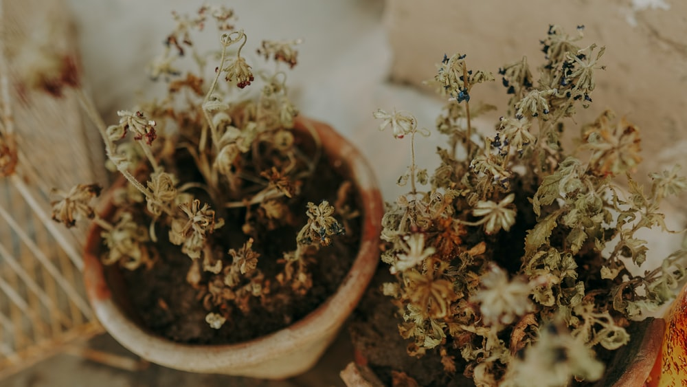 white flowers in brown clay pot
