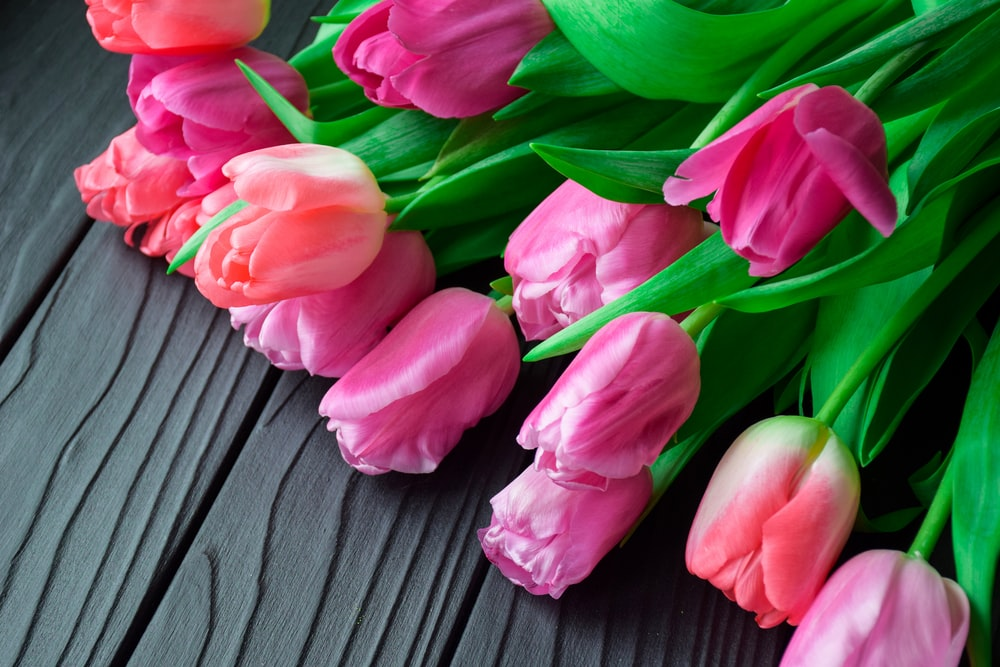 pink tulips on brown wooden surface