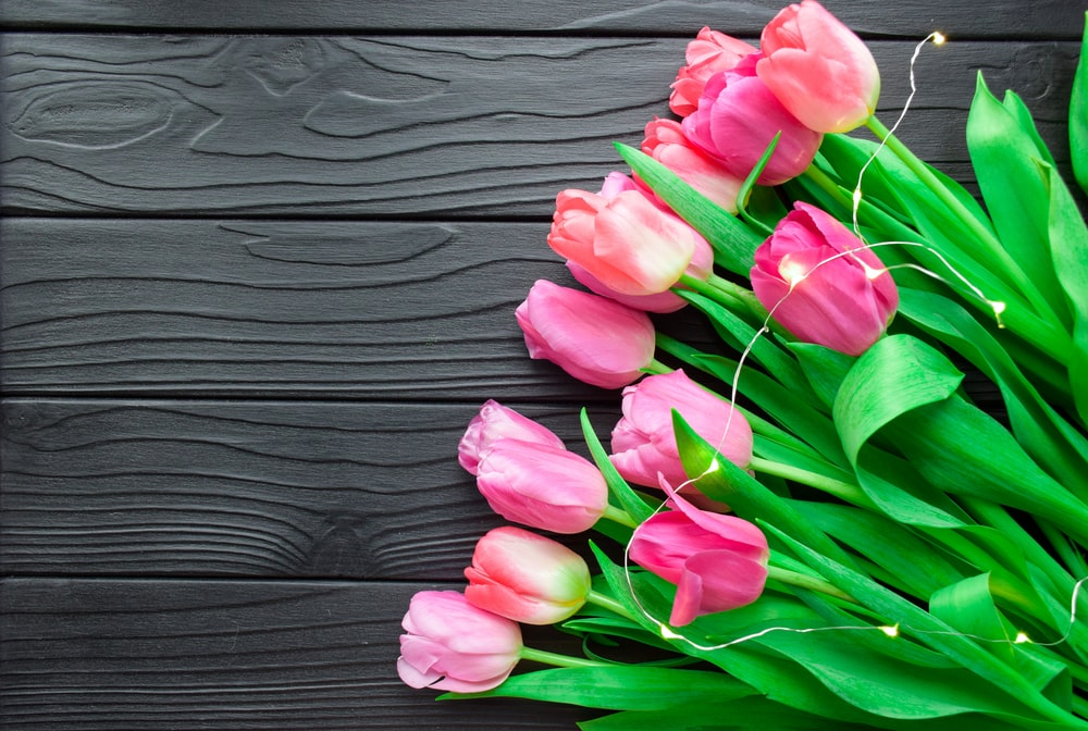 pink flowers on black wooden surface
