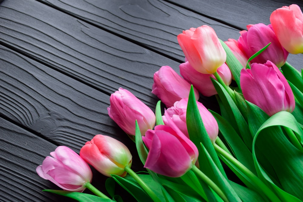pink tulips on gray wooden surface