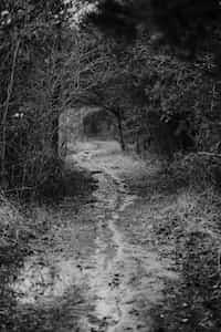 Trail ri stories