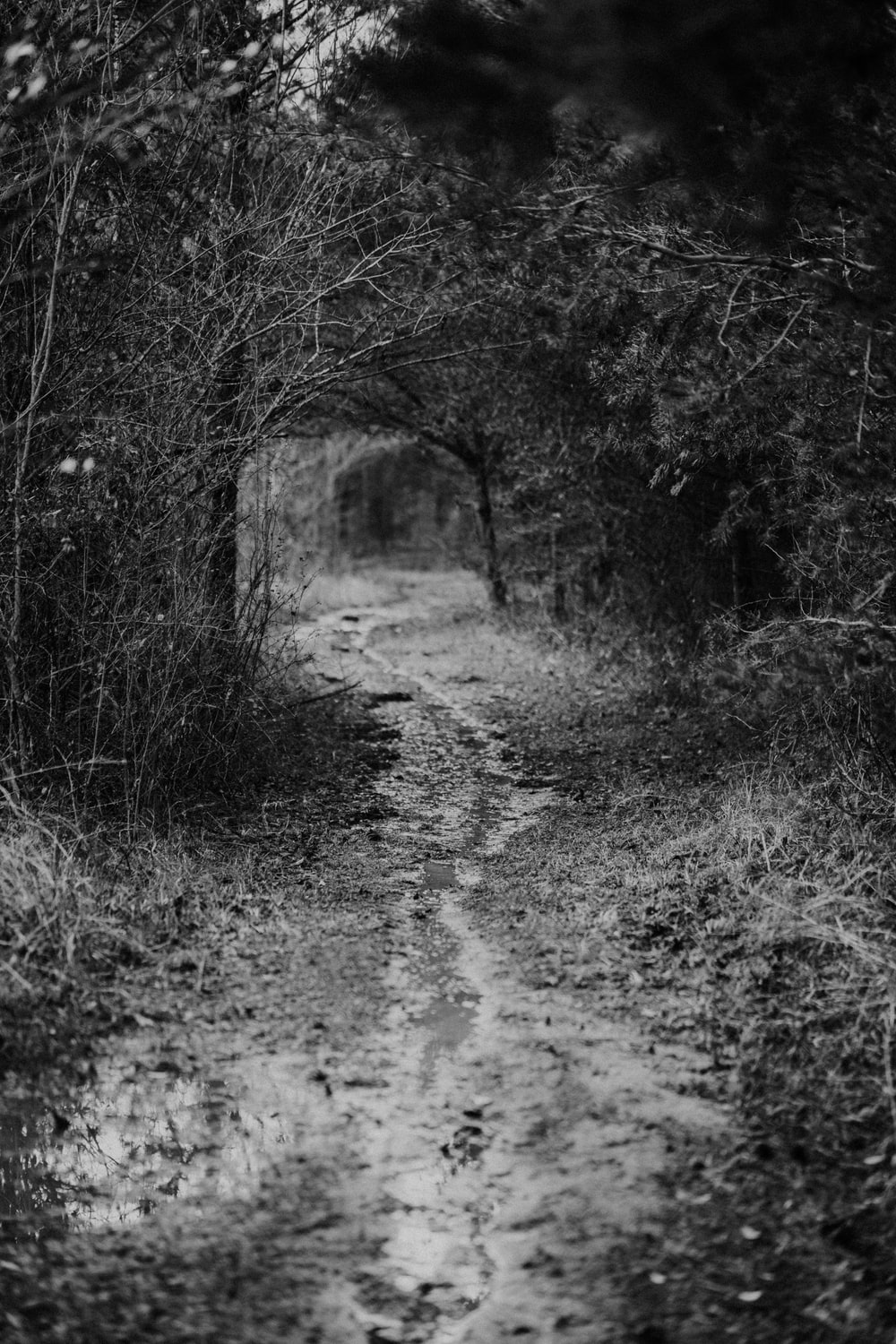 grayscale photo of pathway between trees