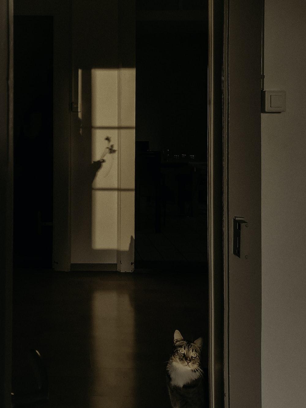 white wooden door closed in room