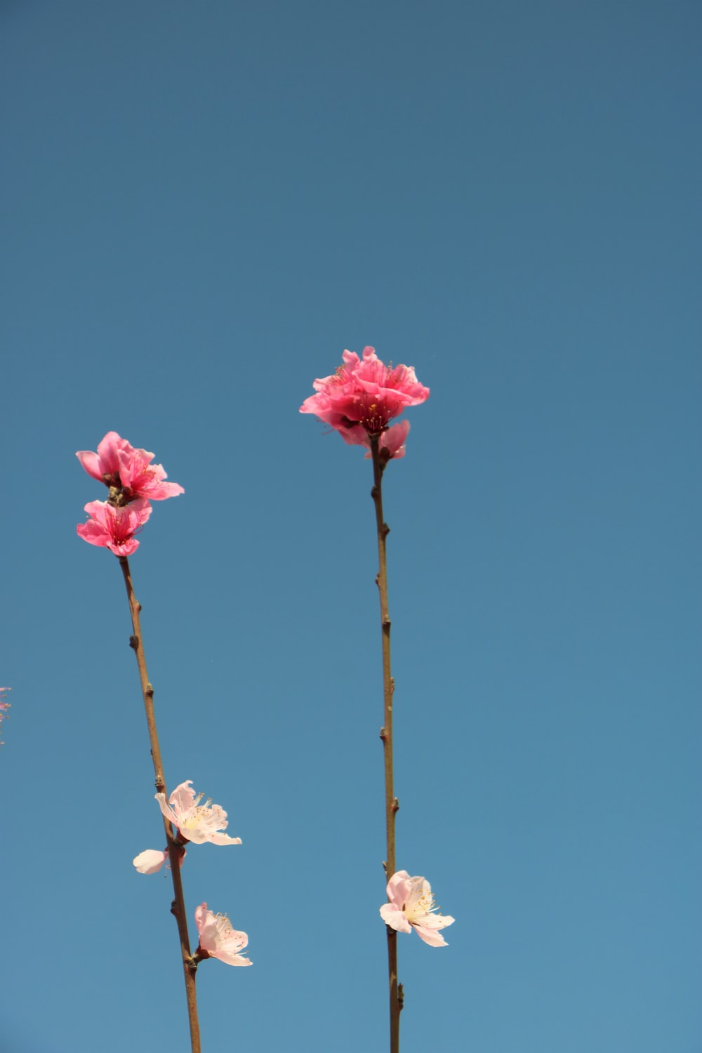pink and white flowers on brown stem