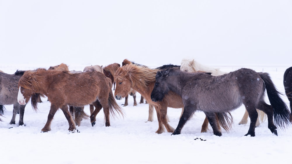 brown horses on snow covered ground during daytime