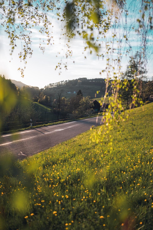 green grass field near road during daytime