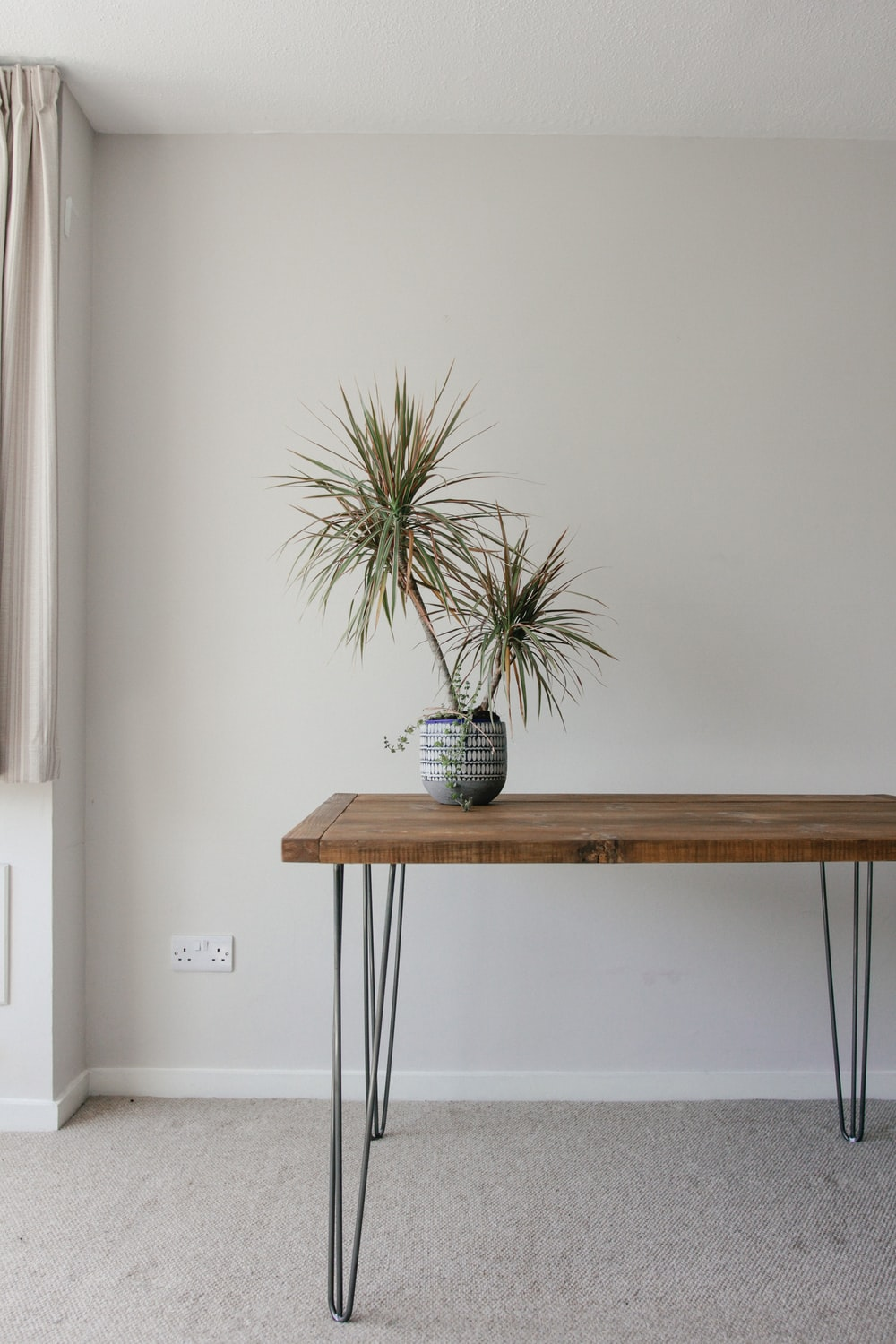 green plant on blue ceramic pot on brown wooden table