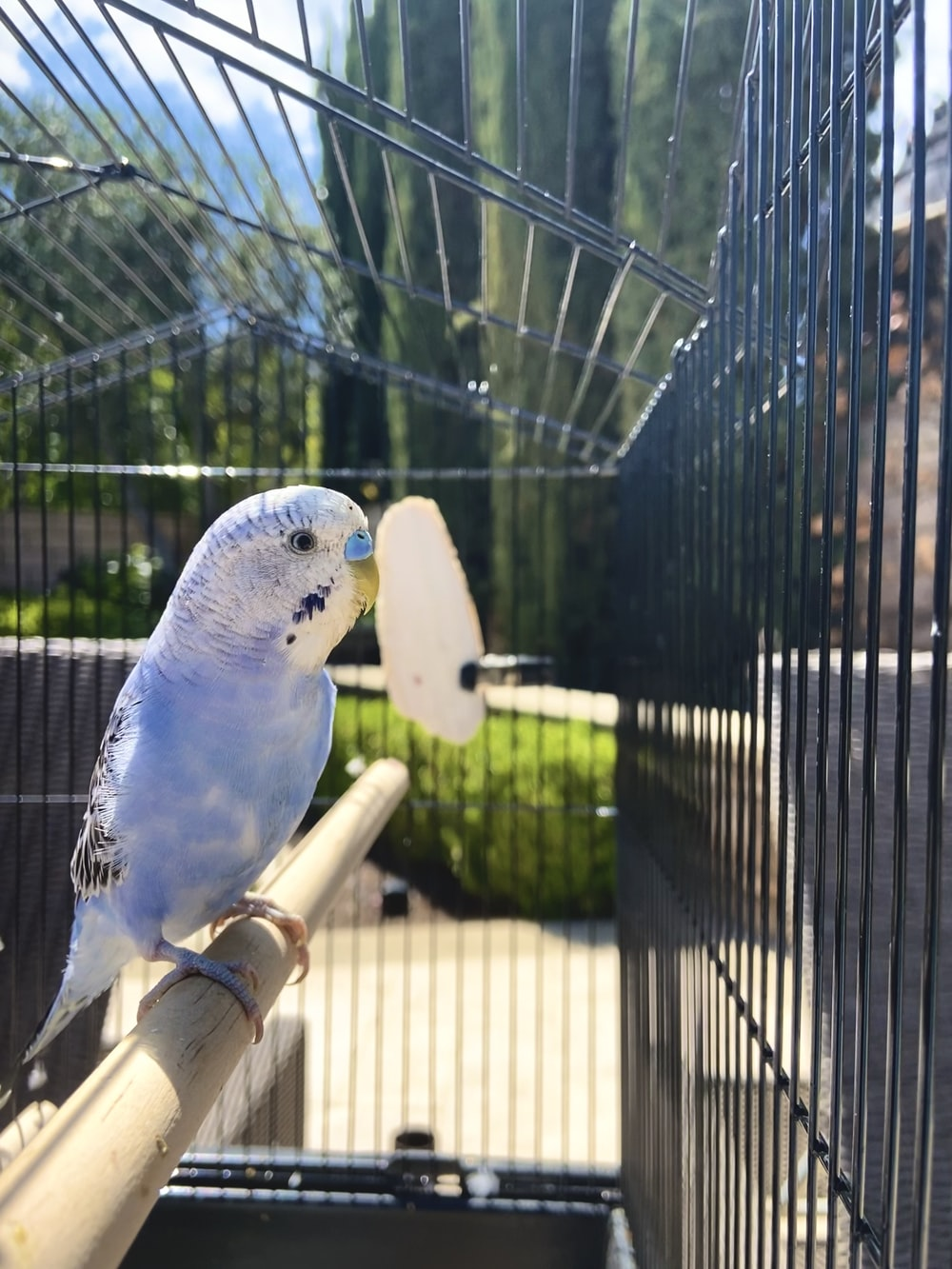 Birdcage Cleaning: Effortless And Time-Saving Methods
