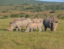 Ziwa Sanctuary - Fahrt nach Entebbe