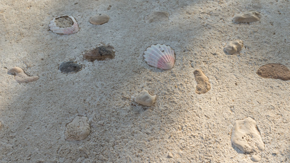 white and pink seashell on white sand