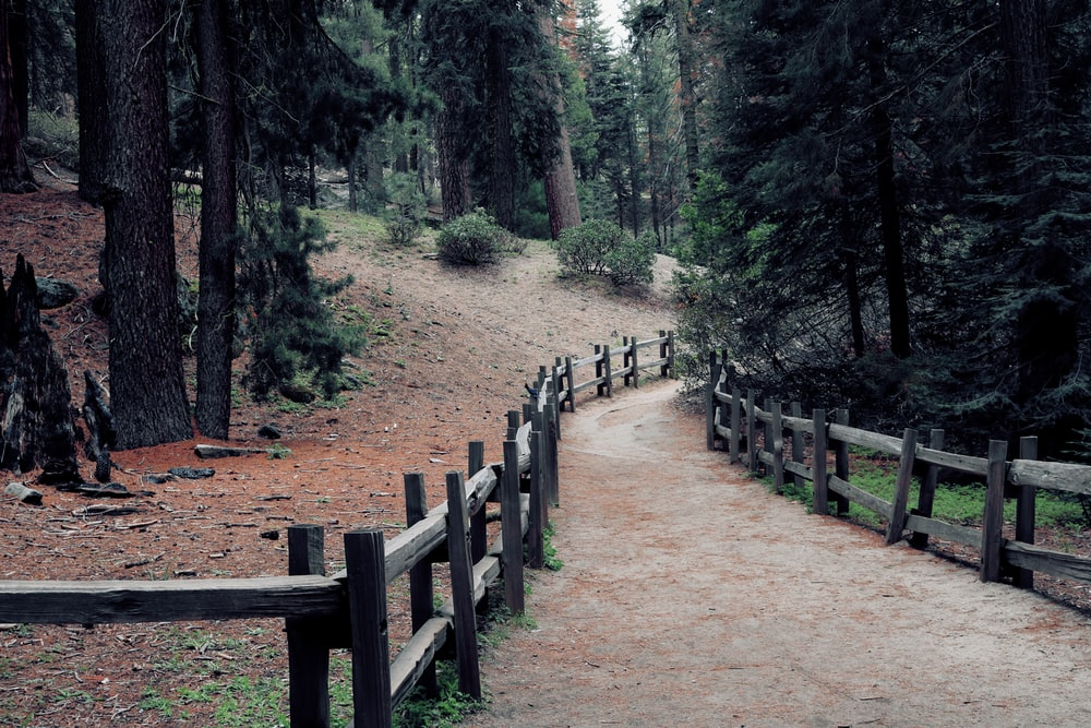 brown wooden fence in forest during daytime